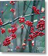 Fall Berries Metal Print