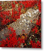 Fall Blueberries And Moss-h Metal Print