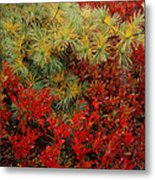 Fall Blueberries And Pine-sq Metal Print