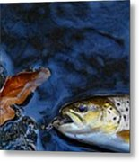 Fall Brown Trout Metal Print