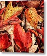 Fall Carpet Metal Print