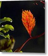 Fall Color 2 Metal Print