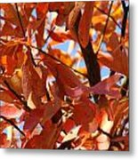 Fall Color 2 Metal Print