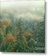Fall Color And Fog Near Garberville California Metal Print