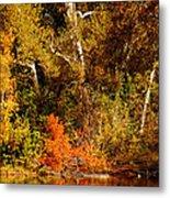 Fall Color Creekside Metal Print