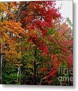 Fall Color Palette Metal Print