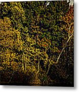 Fall Color Trees V8 Pano Metal Print