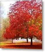 Fall Colored Trees Metal Print