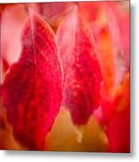 Fall Colors 0666 Metal Print