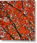Fall Colors 2014-10 Metal Print