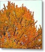 Fall Colors 2014-11 Metal Print