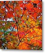 Fall Colors 2014-4 Metal Print