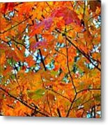 Fall Colors 2014-5 Metal Print