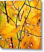 Fall Colors 2014-7 Metal Print