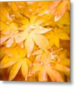 Fall Colors 6664 Metal Print