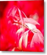 Fall Colors 6669 Metal Print