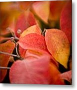 Fall Colors 6675 Metal Print