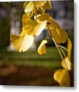 Fall Colors 6737 Metal Print