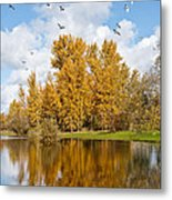 Fall Colors Clouds And Western Gulls Reflected In A Pond Metal Print