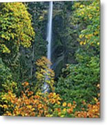 Fall Colors Frame Multnomah Falls Columbia River Gorge Oregon Metal Print