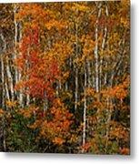 Fall Colors Greeting Card Metal Print