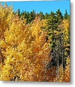 Fall Colors On The Colorado Aspen Trees Metal Print
