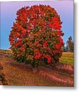 Fall Colors Over A Big Tree In Warmia In Poland During Twilight Hour Metal Print