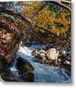 Fall Cottonwood I Metal Print