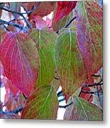 Fall Dogwood Leaf Colors 1 Metal Print