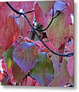 Fall Dogwood Leaf Colors 2 Metal Print