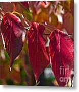 Fall Dogwood Leaves Metal Print