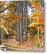 Fall Driveway And Coco The Dog Metal Print