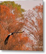 Fall Eagle Metal Print