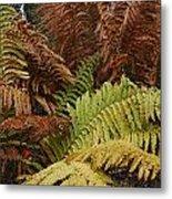 Fall Ferns Acadia National Park Img 6355 Metal Print