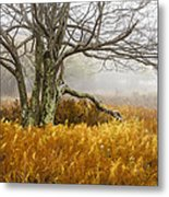 Fall Ferns And Fog Metal Print