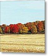 Fall Field Metal Print