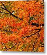 Fall Fiesta Metal Print