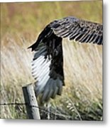 Fall Flight Metal Print
