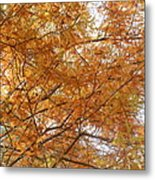 Fall Foilage Metal Print