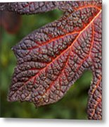 Fall Foliage 4 Metal Print
