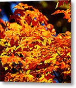 Fall Foliage Colors 16 Metal Print by Metro DC Photography