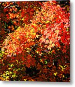 Fall Foliage Colors 21 Metal Print