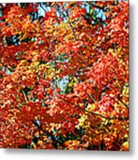 Fall Foliage Colors 22 Metal Print