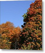 Fall Foliage In The Arboretum Metal Print by Natural Focal Point Photography