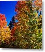 Fall Foliage Palette Metal Print