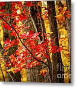 Fall Forest Detail Metal Print