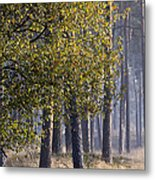Fall Metal Print by Frits Selier