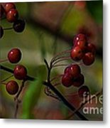 Fall Fruit Metal Print