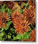 Fall Garden Flowers Metal Print
