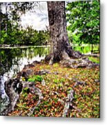 Fall In Audubon Park Metal Print by Ray Devlin